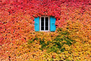 autumn-photography-2-2__880